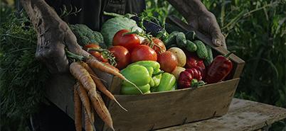 Farmers Market Produce – Vignette